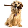 dog with gavel