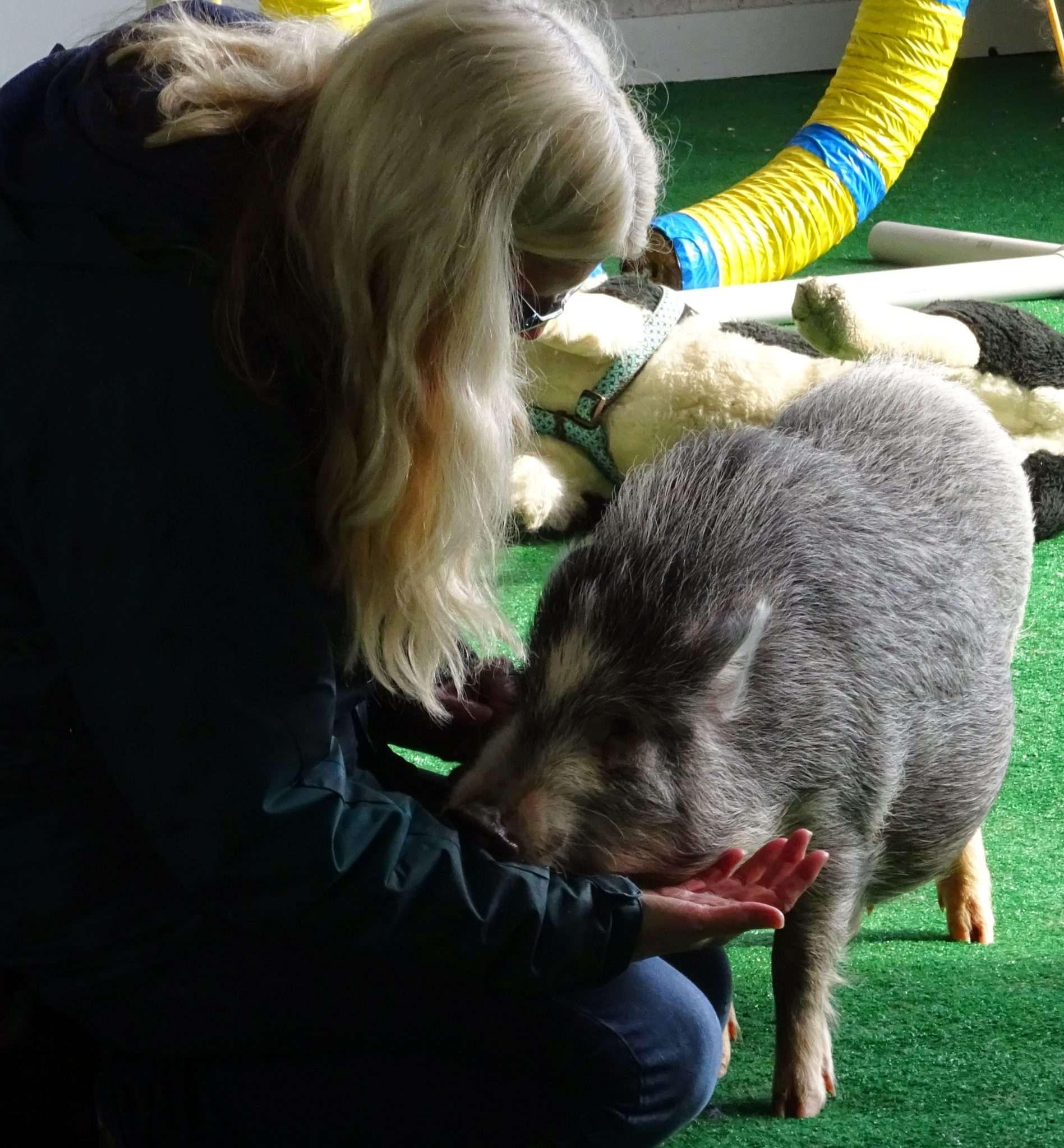 Animal Advocacy | Student Internships