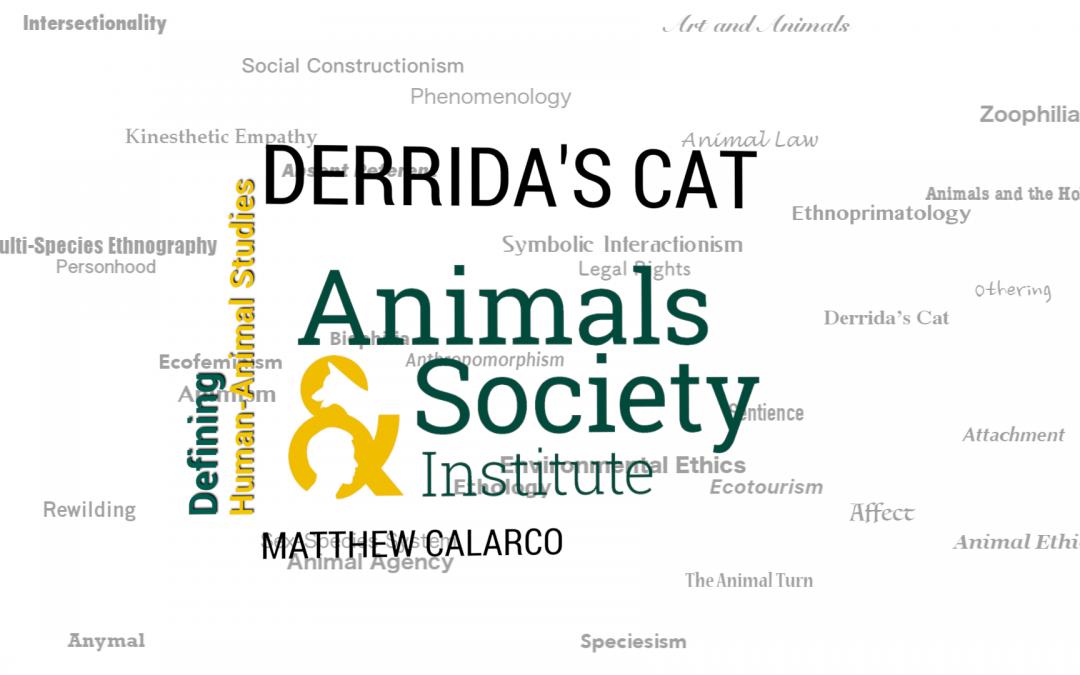 This Week in Defining Human-Animal Studies: Derrida's Cat