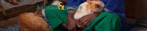 Animals & Society Institute's photo.