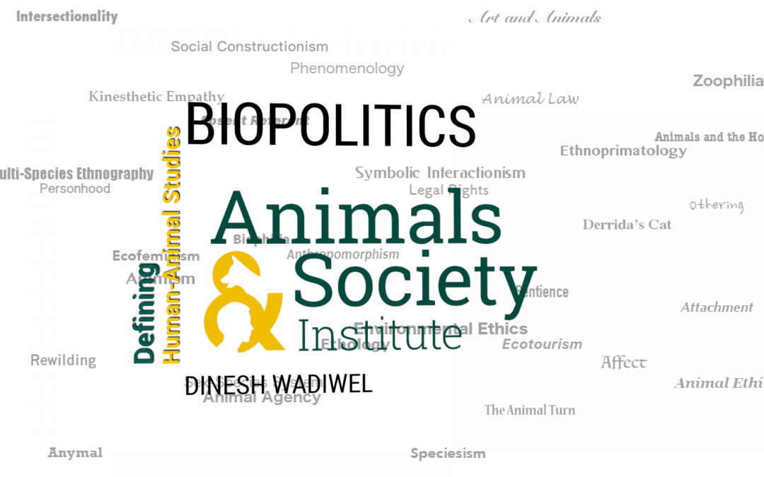 This Week in Defining Human-Animal Studies: Defining Biopolitics with Dinesh Wadiwel