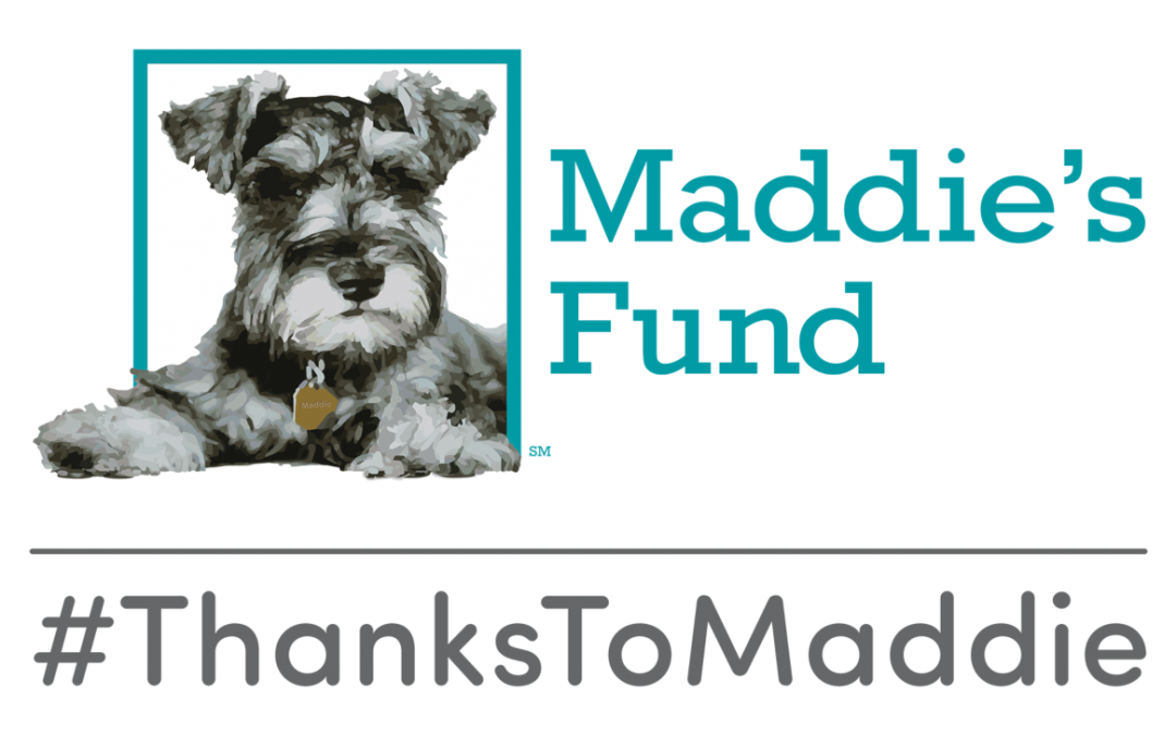 $50,000 Maddie's Fund® Grant to ASI Will Help Open Shelter Doors for Homeless People and Their Pets