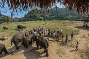 Visitors and volunteers with rescued elephants at Elephant Nature Park.